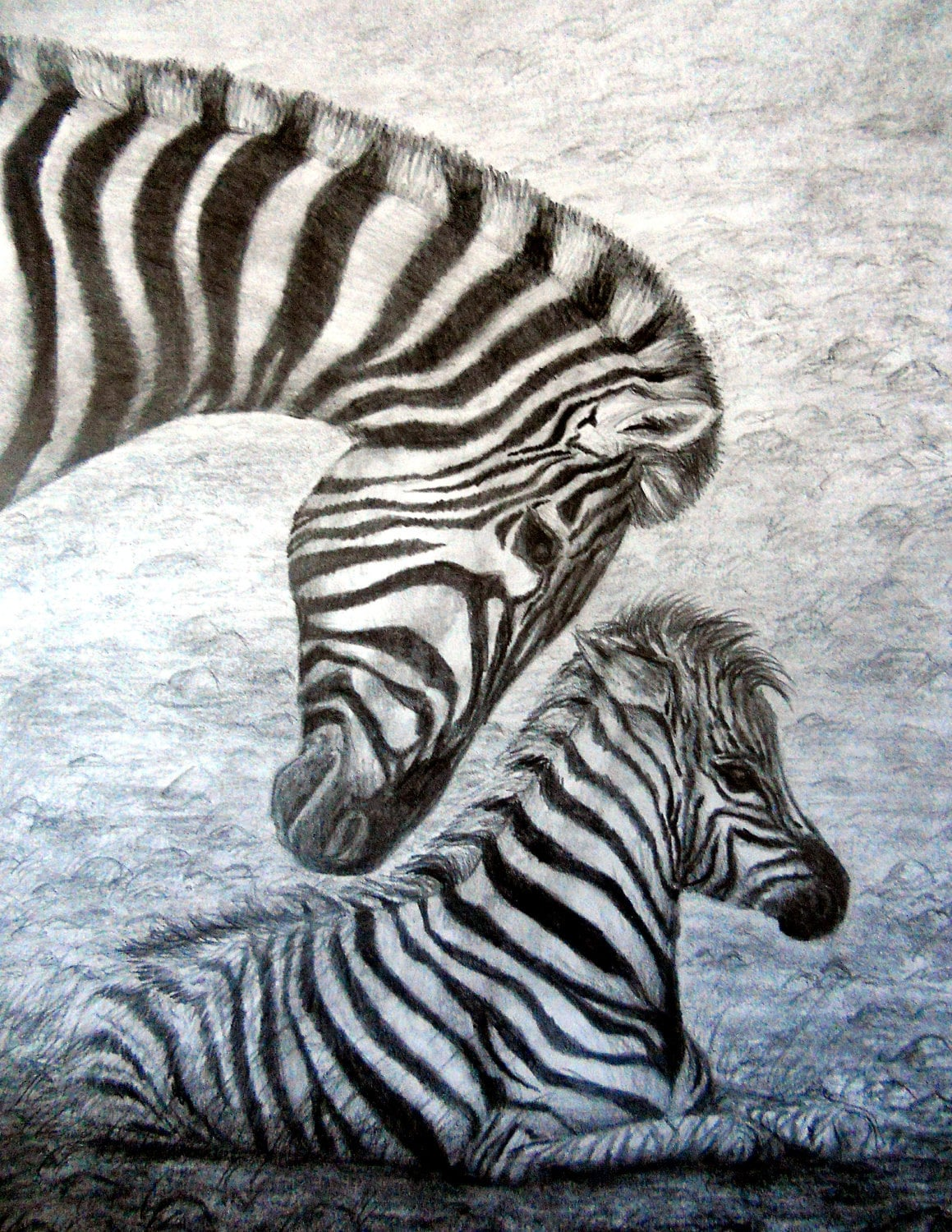 zebra drawing - photo #36