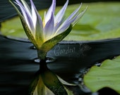 Metal Print - Ready to Hang - WATER LILY No. 1044  - Art Metal Print - Nature Photography - Flower Floral Yoga Spa Meditation