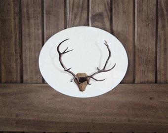Deer Antler Illustration Infused on 8x10 inch Metal Oval