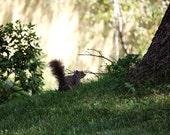 Animal Photo Squirrel Photo, 8x12 Photo, Enchanted Garden Photo, Nature Photo