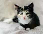 Kitten Photograph - Kitten Print - Kitten Photo - 8x10 Print, Cute Kitten, Black and White Cat, Art Print