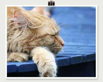 Orange Cat Photo - Orange Cat Print - 8 x 10 Print