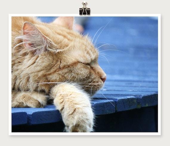 Orange Cat Photo - Orange Cat Print - 8 x 10 Print