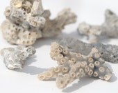 Gray Coral, Coastal Decor, Five Natural Branches,DIY Seashell Sea Shell Supplies for Crafts or Tropical Decorations