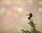 Vintage Shabby Chic Black Bird on Leaf Branch Fine Art Photography - Set of 3 - 5 x 7