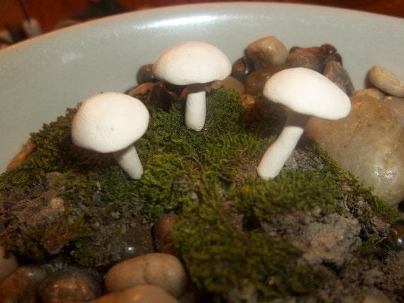 set of 3 miniature fairy garden or terrarium mushrooms