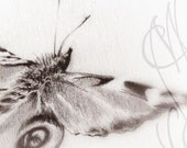 "Martinefa's original drawing presented in hand personalised frame - Butterfly ""Frivole"""