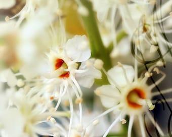 Fleurs-3 - 8x10 (20 x 27 cm) Fine Art Photograph