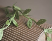 Sage green leaf ribbon for gift wrapping - 1 yard long