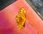 Hand-colored Art Tile- Agapanthus Bloom with pink, yellows and oranges- kitchen backsplash or accent tile- gifts under 10