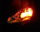 Lighted Real Bone Coyote Animal Skull Lamp Taxidermy tribal nightlight weird art lighting