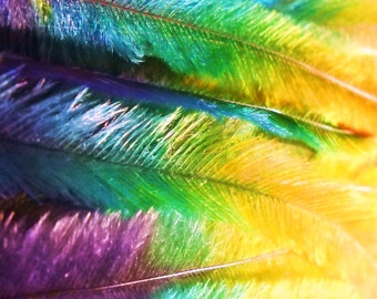 5 Tie Dye Feather Extensions CRUELTY FREE Rainbow Emu Feathers for hair FTHR10