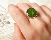 Nature ring with real leaf of Nasturtium - handmade green jewelry - Tropaeolum majus