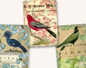 """ANTIQUE BIRDS  2.5 X 3.5"""" Aceo size vintage bird prints for paper crafts gift tags swing tags  MagentaBelle printable download no 96"""