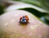 ON SALE -Lady Bug sitting on an apple - Wall Decor - Fine Art Photography