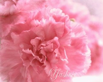 Soft pink-  Fine art photographic floral print,  pink flower,  home decor, abstract.