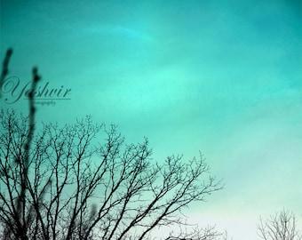 Teal sky- Photography print of tree agaisnt a lovely teal / torquoise sky. Home decor