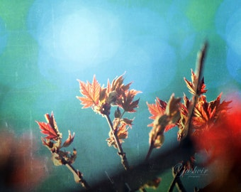 Budding leaves. Fine art photographic print, abstract, dreamy, green, turquoise, teal, red and orange.