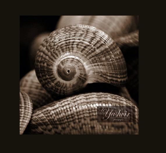 Sea shells-  Photography fine art  print black and white, beach, sea shells