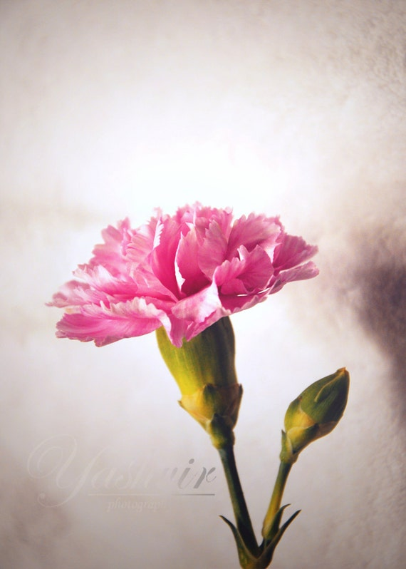 Dreamy - Photography print of flower. Enchanted and romantic. Valentine's or wedding gift / decor.