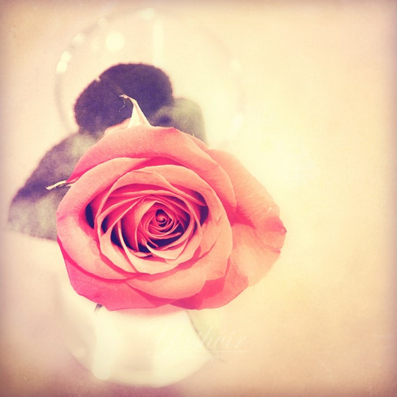 Renaissance rose- Fine art photography of red rose, floral, nature, home decor, abstract. Vintage inspired, dreamy, shabby chic decor.
