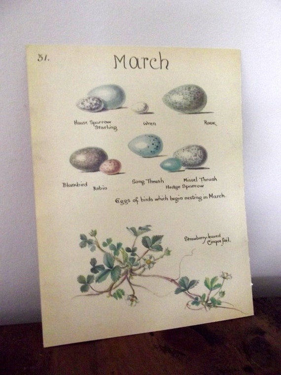 home decor / English country cottage /  book  page / eggs / wall hanging  / blackbird / UK