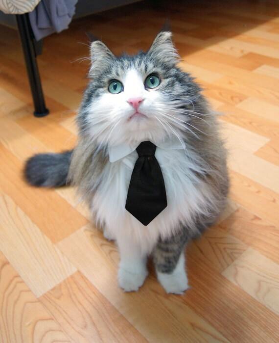 Pet Dog Cat Collar ACCESSORY Black Necktie