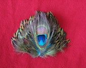 Peacock and Green Pheasant Feather Hair Clip and Pin