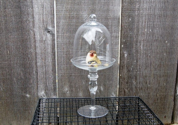 Glass Dome Cloche for cupcake or for display