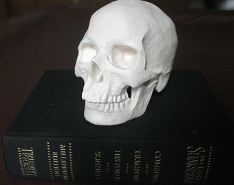 HUMAN SKULL SCULPTURE: life-size plaster cast