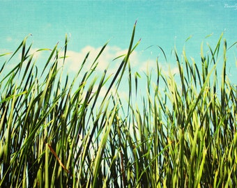 blue, green,  fine art photography, summer, grass and sky