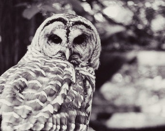 owl, nature, fine art photography,