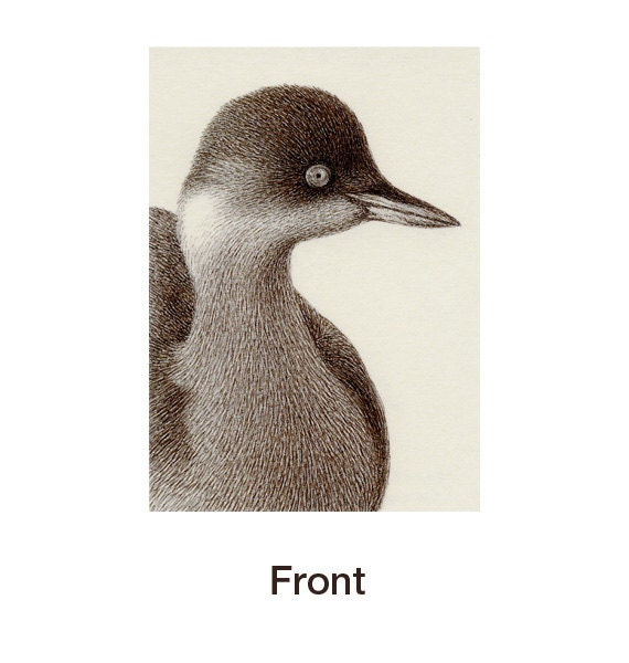 ACEO Print - Pure Pen Drawing 50 - Black-necked Grebe