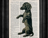 Black Doxie Wiener Dog Dachshunds Dictionary Book Art Print 8x10 Size Free Shipping Item 197