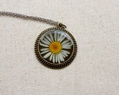 pressed flower necklace resin daisy jewelry circle filigree edge in bronze real natural nature white wildflower botanical by studiobotanica