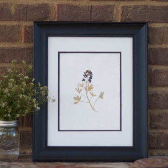 real pressed flower artwork texas blue bonnet wildflower botanical natural wall art for your home, country cottage farmhouse