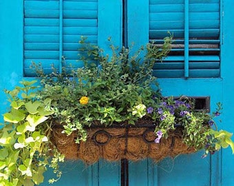 PRINT ONLY - French Quarter Shutters - New Orleans
