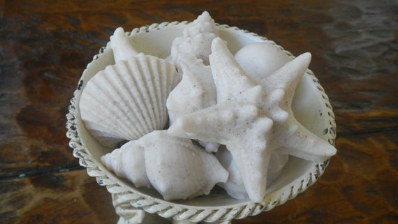 Shea Butter Sea Shells Soaps in Ocean Scent