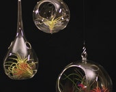 Airplant/Tillandsia-Set of 3 Different Glass Terrarium Orbs with Assorted Airplants