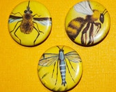 Trio of Upcycled Vintage Insect Pinback Button Set. (3)