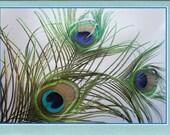 Hand made original mixed media print of peacock feathersblank greeting card - art print PHC004