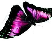 Artprint Photograph Butterfly Pink Original