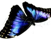 Artprint Photograph Butterfly PurpleBlue Original