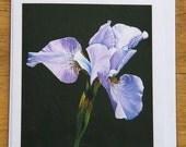 Iris siberica A5 Greetings card
