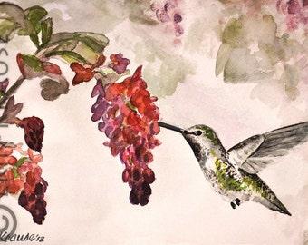 Sweet Hummingbird - Original Watercolor