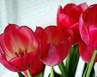 "Bunch of Tulips Print 8""x10"" print"
