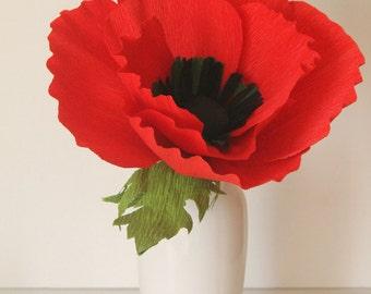 Giant flower,Large paper poppy