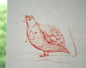 Doctor Bird - Print of my Original Drawing - Wall Decor