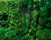 Live Green Moss - Lush, Thick - Sold by square foot