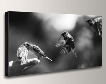 "Nature Photography - Panorama - Black & White - Canvas Print - Birds - Art Print - "" Bird in Hand """